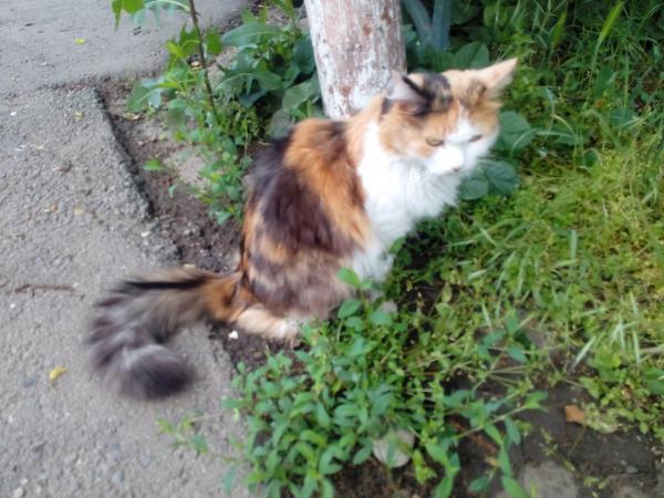 Доставить кошку недорого из Краснодар в Санкт-Петербург