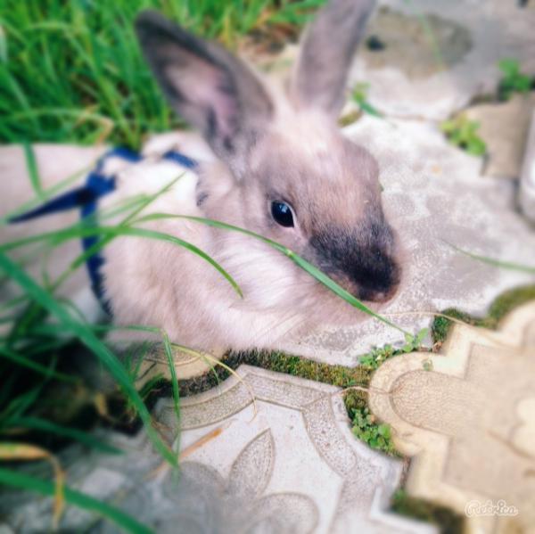 Перевезти кролика недорого из Москва в Санкт-Петербург