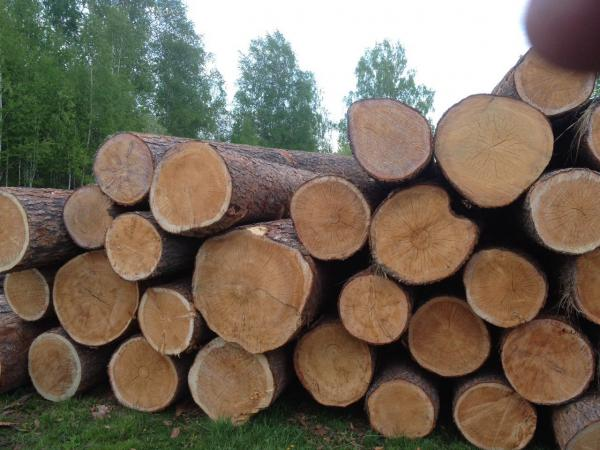 Отвезти круглый леса цена из Асина в Гдов