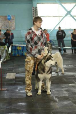 Перевезти собаку  из Украина, Мариуполь в Россия, Санкт-Петербург