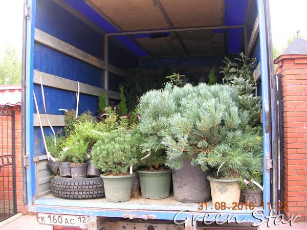 Сколько стоит перевозка декоративных растений В контейнерах их питомника из Верея в Йошкар-Ола