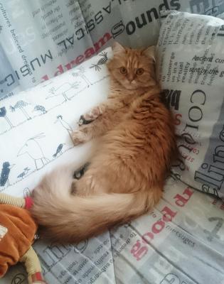 Сколько стоит доставка кошки недорого из Казань в Москва