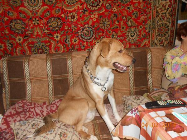 Перевезти собак из Санкт-Петербург в Красная Поляна