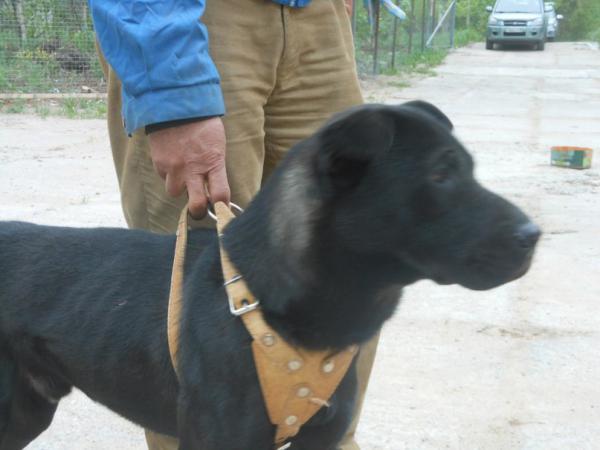 Транспортировка собаки  недорого из Астрахань в Гатчина