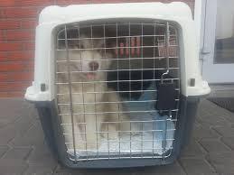 Отвезти щенка В переноске з месяца из Пушкин в Тула