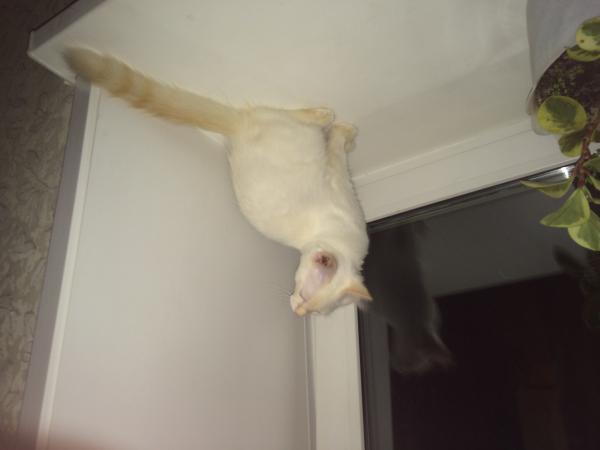 Перевозка котенка из Хабаровск в Комсомольск-на-Амуре