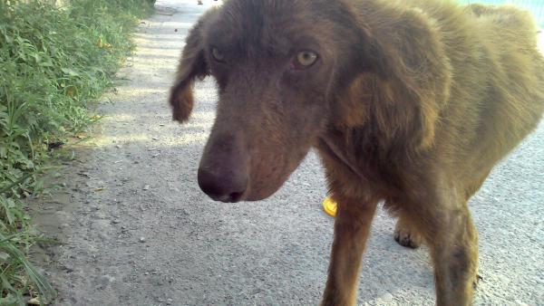 Услуга по транспортировке собаки  из Сочи в Самара
