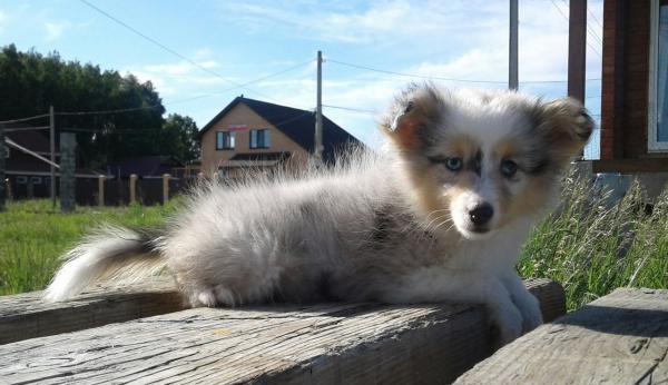 Сколько стоит отвезти щенка недорого из Челябинск в Калининград