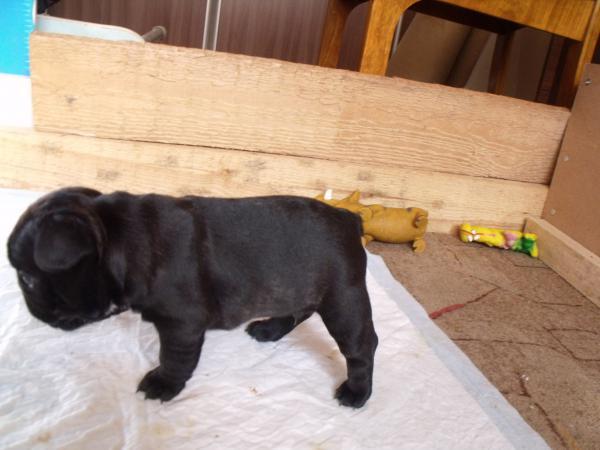 Доставить собак из вологодская область г. череповец в Республика Коми г. Ухта