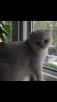 Транспортировка кошки из Москва в Грозный
