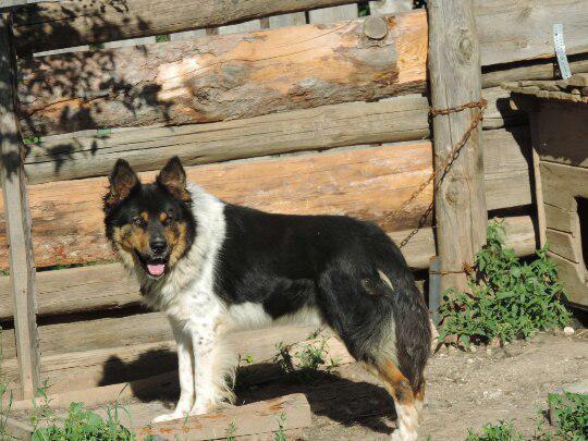 Сколько стоит доставка собаки  недорого из Малмыж в Казань