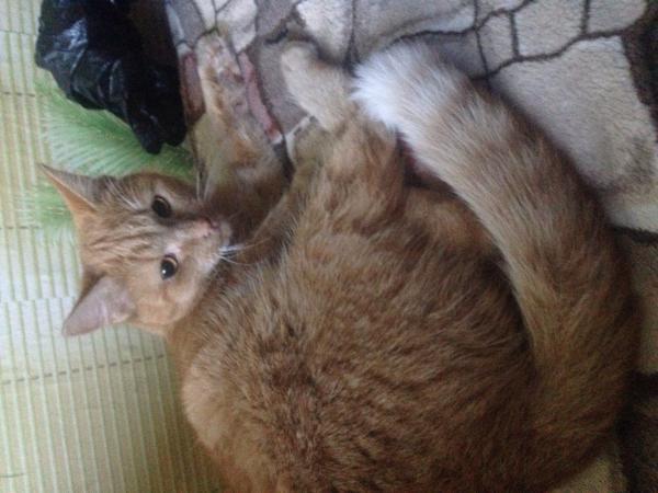 Транспортировать кошку автотранспортом из Россия, Санкт-Петербург в Украина, Харьков