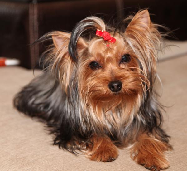 Доставить собак из Томска в Крыма
