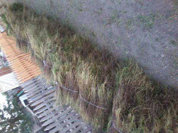 перевезти веники (караганник) цена догрузом из Усть-Каменогорск в Караганда