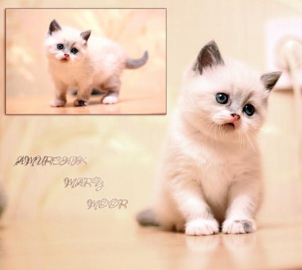 Доставить котенка недорого из Ярославль в Ижевск