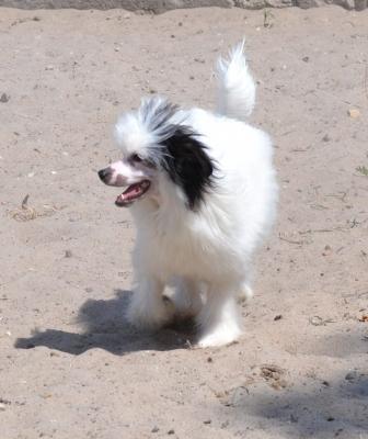 Доставить собаку  из Подольск в Электросталь