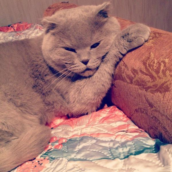 Сколько стоит транспортировать кота недорого из Москва в Ставрополь