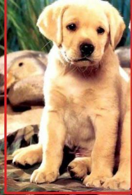 Сколько стоит перевезти щенка недорого из Красноярский край в Нижнеудинск