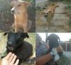 Доставить 4 щенку И один взрослый собаку  автотранспортом из Феодосия в Москва
