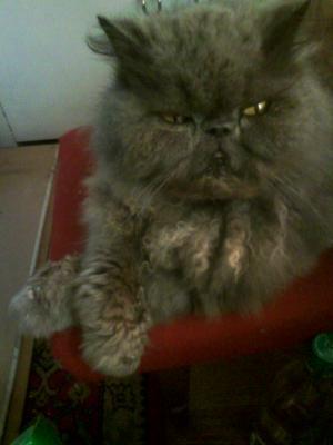 Перевезти кота недорого из Находка в Санкт-Петербург