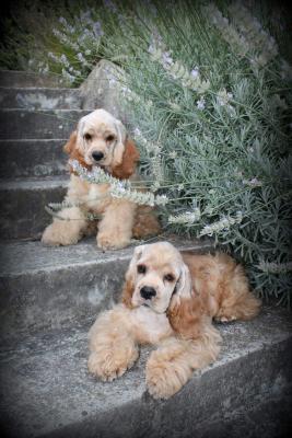 Отвезти собаку  из Сочи в Краснодар
