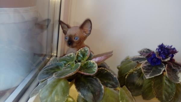 Доставить котенка дешево из Воронежская область в Санкт-Петербург