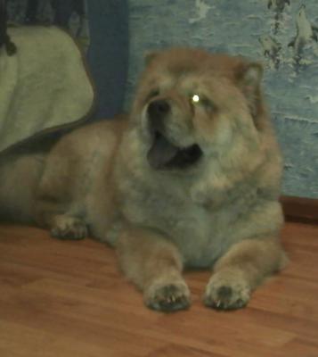 Доставка собаки  из Ижевск в Саранск
