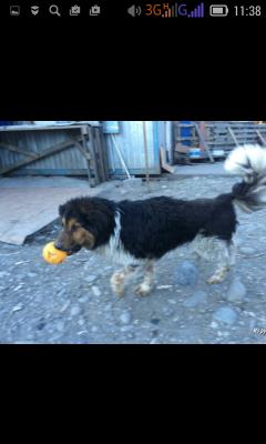 Доставить собаку  недорого из Сочи в Новороссийское