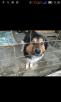 Перевозка собаки  недорого из Сочи в Новороссийск