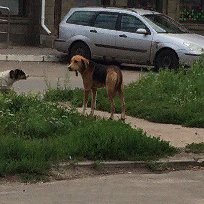 Транспортировать собак автотранспортом из Орел в Курск