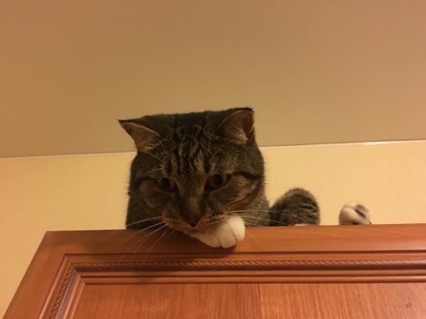 Сколько стоит перевозка котенка, оливкового масла, Пряжи недорого из Санкт-Петербург в Старый Оскол