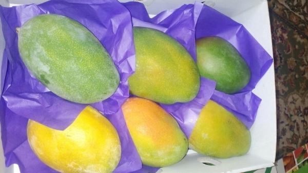 Перевозка манго, манго, манго, мвнго, манго из Новороссийск в Москва