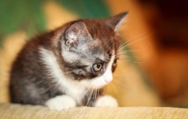 Перевезти котенка недорого из Саратов в Уфа
