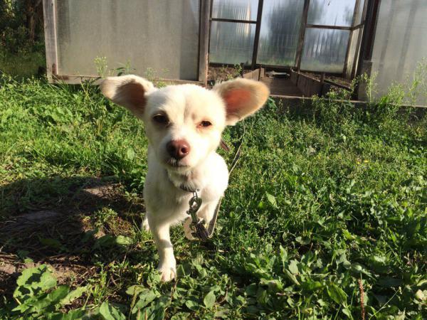 Сколько стоит отвезти собачку мелкой породы недорого из Томск в Ачинск