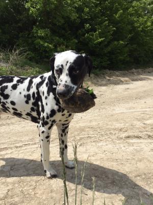 Сколько стоит транспортировка собаки  недорого из Геле в Москва