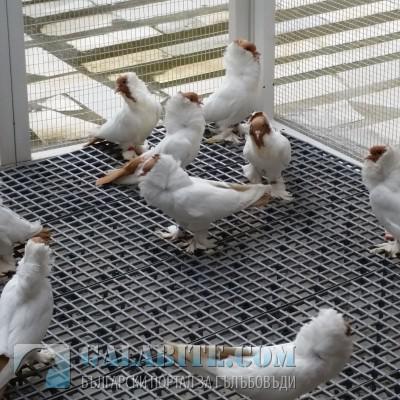Перевозка голубей из Краснодарский край (р-н Лабинский) в Санкт-Петербург