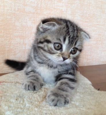 Перевозка котенка недорого из Курган в Москва