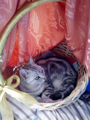 Отвезти кошку автотранспортом из Москва в Сочи