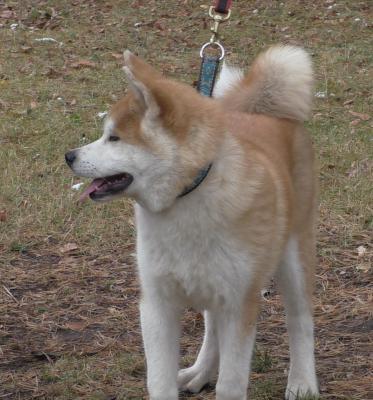 Перевозка собаки  дешево из Тольятти в Москва