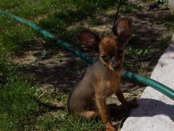 Сколько стоит транспортировать щенка недорого из Тюмень в Череповец