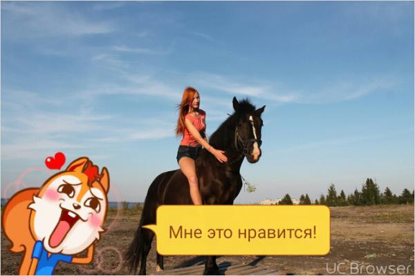Сколько стоит перевозка лошади недорого из Петрозаводск в