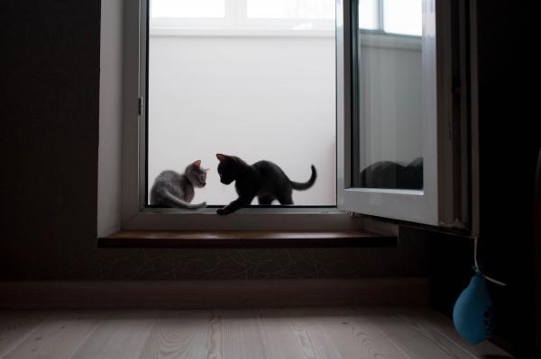 Перевозка котят из Москва в Санкт-Петербург