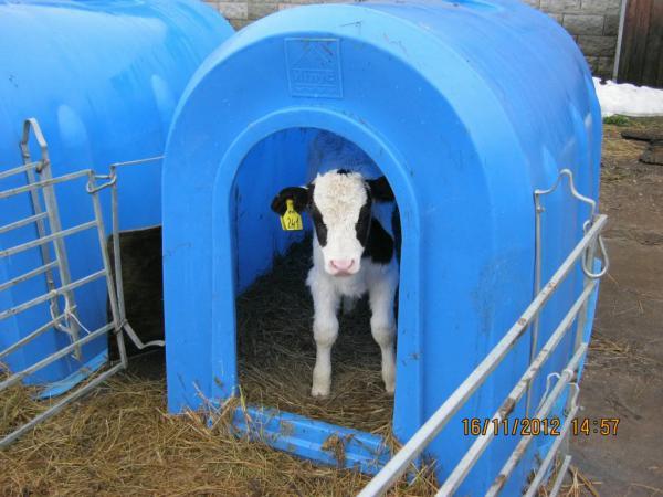Стоимость транспортировки домика для телёнка попутно из Краснодар в поселок Ильевка