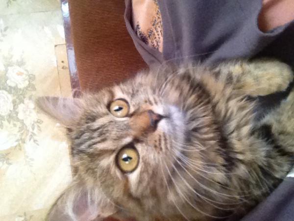 Сколько стоит транспортировка кошки недорого из Иркутск в Краснокаменск