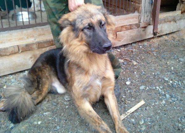 Доставка собаки  недорого из Хабаровск в Москва