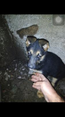 Доставить собаку  автотранспортом из Армения, Ереван в Россия, Сочи
