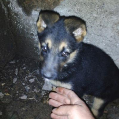Перевозка щенка недорого из Армения, Ванадзор в Россия, Сочи