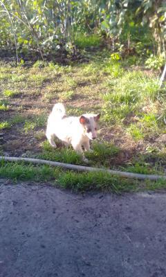 Перевезти щенка недорого из Омск в Благовещенск