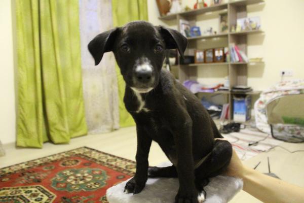 Отвезти месячный щенка недорого из Новая Адыгея в Тихорецк