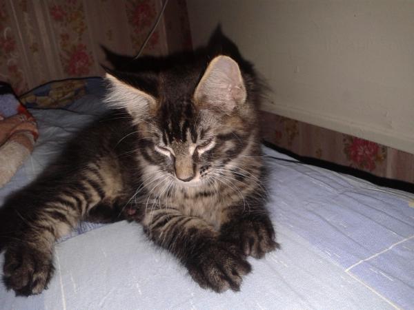 Транспортировать котенка дешево из Санкт-Петербург в Первомайский